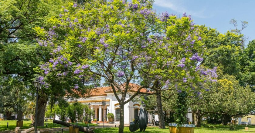 VERANO EN EL MUSEO SAAVEDRA